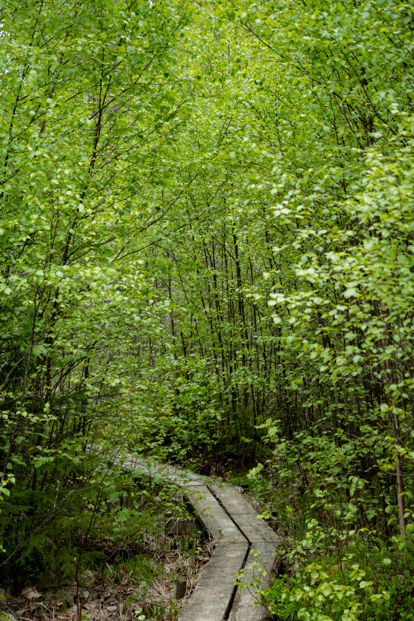 Scandinavian Nature & Forest Theraphy institute